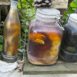 Stock Photo: Colection of preserved reptiles in jars