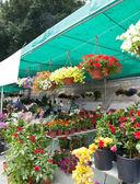 цветочный рынок — Стоковое фото