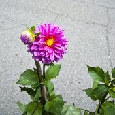 Flower market — Stock Photo