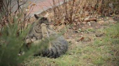 猫の演劇 — ストックビデオ