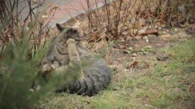 Kedi oyunu — Stok video
