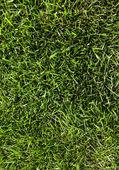 Green grass field — Fotografia Stock