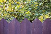 Purple wooden fence — Stock Photo