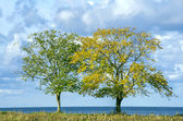 Two trees on seaside — Stock Photo