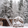 Stock Photo: Winter forest and wood stack