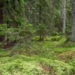 Stock Photo: Green mossy forest with dead tree