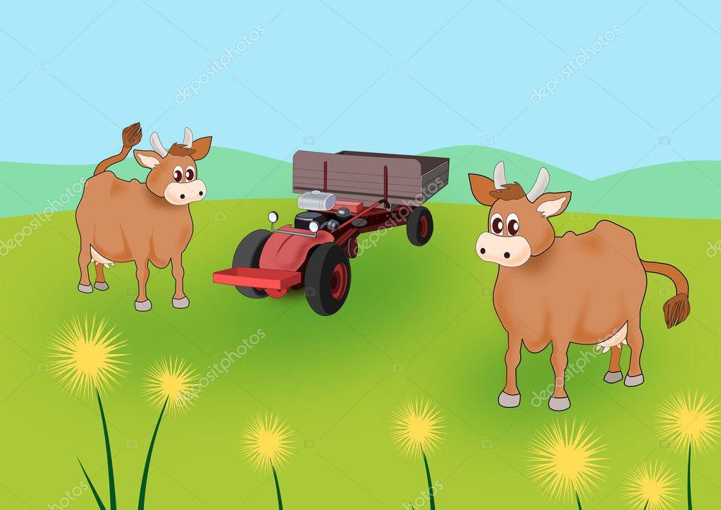 Mucche — foto stock unnibente