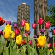 Stock Photo: Chicago in Spring