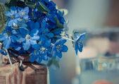 Blue wildflowers in a vase (Hepatica) — Foto Stock