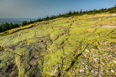 Cadillac Mountain - Acadia National Park — Stock Photo