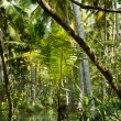 Kerala backwaters jungle — Stock Photo