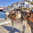 Donkeys on Greek island — Foto de Stock