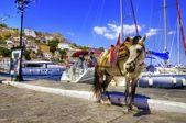 Donkey on Greek island — Stock Photo
