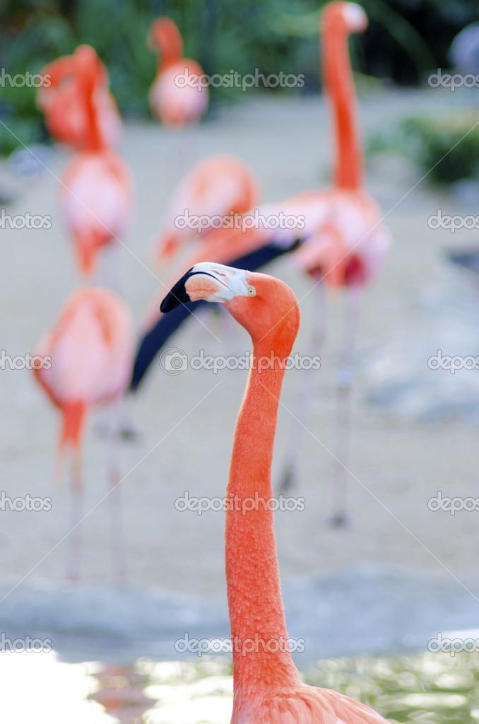 奇怪的鸟喙形状