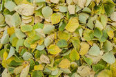 The green and yellow foliage — Stock Photo