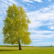 Lonely tree - 