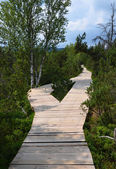 Wooden footbridge in educational trail Chalupska slat — Stock Photo