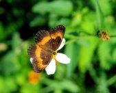 Flower in spring — Stock Photo