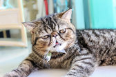 Tabby Cat — Stock Photo
