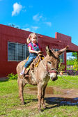 Child riding a miniature donkey — Stock Photo