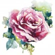 Watercolor rose. Flower painting. Vector EPS 10. — Stock Vector #49575193