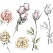 Set of hand drawn roses. Vector flowers illustration. — Stock Vector #49891043