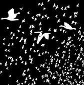 Black background birds life vector art — Stock Vector
