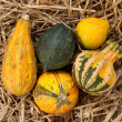 Stock Photo: Thanksgiving pumpkins on straw at daylight