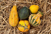 Thanksgiving pumpkins on straw at daylight — Stock Photo