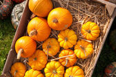 Thanksgiving pumpkins on straw at daylight — Stock Photo