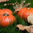 Stock Photo: Thanksgiving pumpkins on grass with autumn leafs