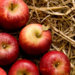 Stock Photo: Fresh red apples on straw at daylight