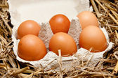 Brown organic eggs in a box on straw — Stock Photo
