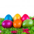 Colorful painted easter eggs located on a meadow with flowers — Zdjęcie stockowe