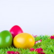 Colorful painted easter eggs located on a meadow with flowers - Stock Photo