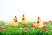 Three yellow chicken isolated on a green meadow with flowers on white background — Stock Photo