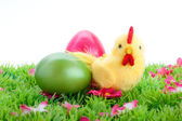 Chick with Easter eggs on a green field with flowers isolated on white background — Stock Photo