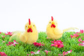 Two yellow chicken isolated on a green meadow with flowers on white background — Stock Photo