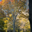 Autumn tree — Stock Photo #13551103