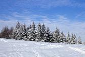 Before snow — Stock Photo