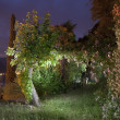 Garden at night — Stock Photo