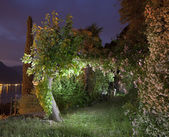 Garden at night — Stock Photo