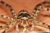 Macro- large spider on the floor — Stock Photo