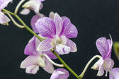 Beauty orchid-colored wine — Stock Photo
