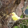 Yellow parrot on tree branches — Stock Photo
