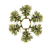 Round tree — Zdjęcie stockowe