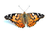 Painted Lady (Vanessa cardui) isolated on white — Stock Photo