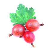 Fruta groselha vermelha com folha isolada no branco — Fotografia Stock
