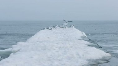 Winter sea seagulls. High quality and resolution — Stock Video