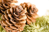 Christmas decoration of fur-tree and cones — Stock fotografie